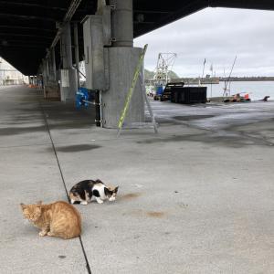 北海道の外猫さんたちとの再会