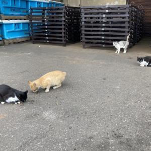 北海道の外猫祭り~☆