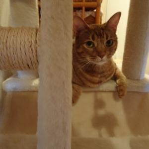暑い夏、涼しい場所を探す猫さん