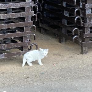 外猫さんのご近所付き合い