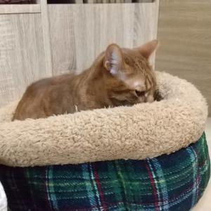 猫ベッド、我が家の猫さんの使い方