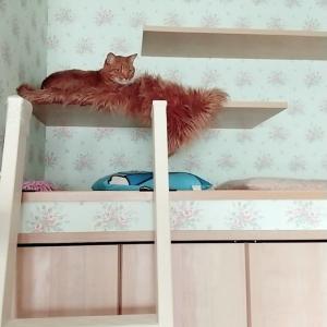 季節が変わり、猫さんのお気に入りの場所は