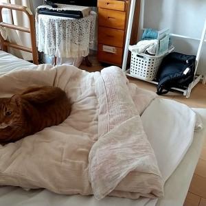 平日の昼間は、猫さんの天下~♪