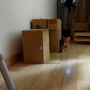 猫毛対策に、ニトムズのコロコロクリーナー購入しました