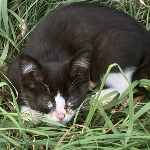 北海道森町の猫さん一家