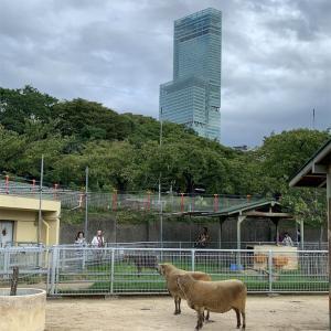 またまたまた天王寺動物園へ