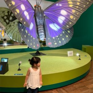 大阪市立自然史博物館 特別展昆虫へ