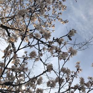 花や自然に癒される