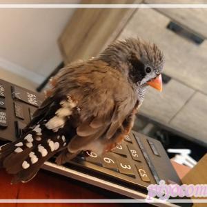 ズルしちゃうシニア鳥