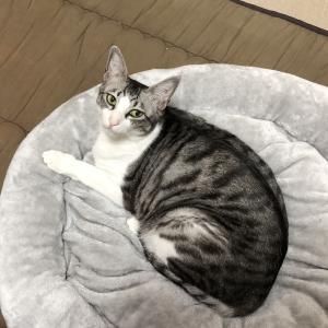 猫ベッド復活