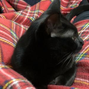 黒猫は可愛い。性格が。