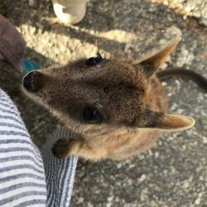 【子連れ旅行】ケアンズ5泊5日⑥ドキドキ動物探索ツアーに参加