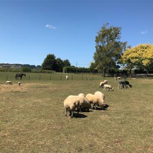 【ニュージーランド親子留学】ファームステイで動物たちとのんびり過ごす