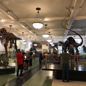 【ニューヨーク単身2人子連れ旅行】アメリカ自然史博物館で恐竜を見る