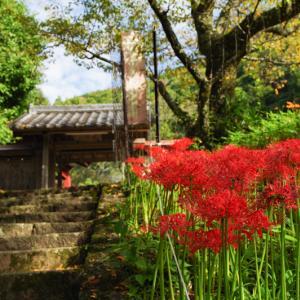 奈良県宇陀市 仏隆寺の彼岸花を観に行きました その3