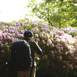 生駒 枚岡公園~神津嶽コース~なるかわ園地 ツツジ その15