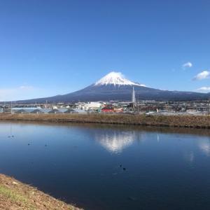 早咲きの桜と富士山