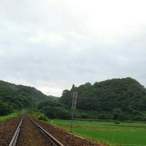 ポメラニアン 旅に出たい?線路を見つめる