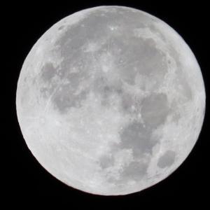 久々に満月を撮りました
