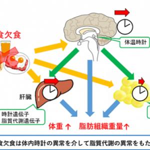 朝必見!今朝から始めよう!時間がなければコンビニで朝食を。 朝食を抜くと体重が増えるのは体内時計の異常の為 名古屋大学の研究