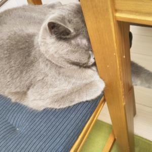 ウタの眩しいときの寝ポーズ