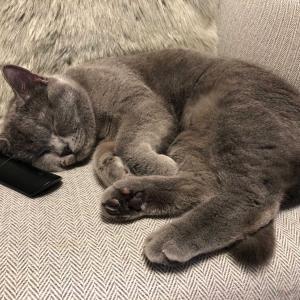 普通、ネコは丸くなって寝るもんたけど・・・