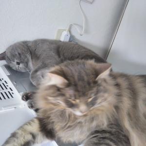 冷蔵庫の上で仲良く
