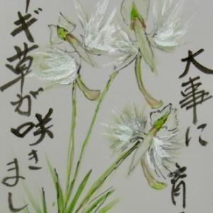 小山ヶ丘絵手紙教室8月の絵手紙