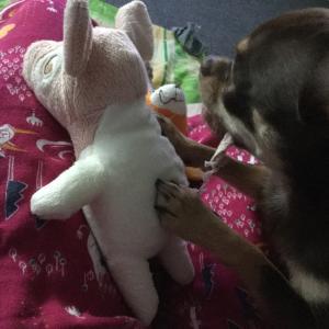 続 Pigguのしっぽ