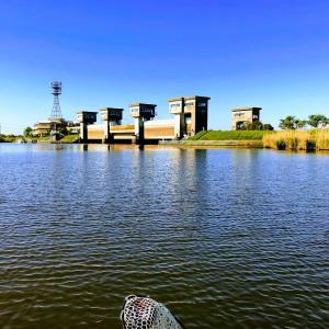緊急SOS池の水全部抜く大作戦 初めて見ました。