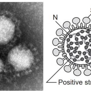COVID-19(新型コロナウィルス)平和ぼけ