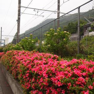 《陣馬山》① 藤野駅からStart→栃谷尾根から山頂へ
