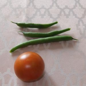 トマト初収獲
