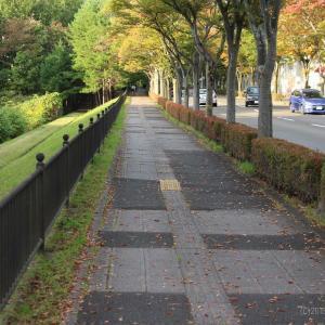 秋の並木道をぶらり散歩