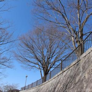 暖かな日には桂島緑地で散歩を