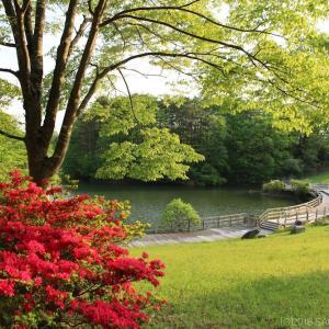 ツツジの花が咲く桂島緑地の散歩道にて