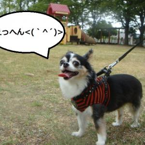 #098 狂犬チョビ