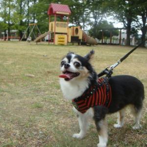 #095 散歩(36) 若宮公園