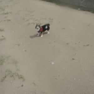 #096 犬キャン△(3) 徳光海岸