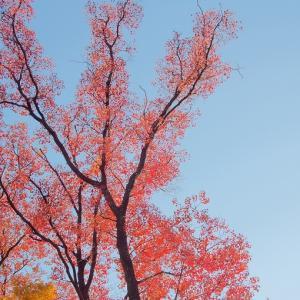 温かな色の季節