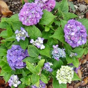 古民家の庭を飾る花々