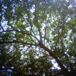 龍on古民家の木
