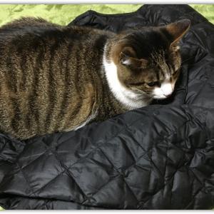 彼のとっては、私の上着は好い敷物