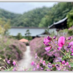 萩の花で有名な寺 最明寺