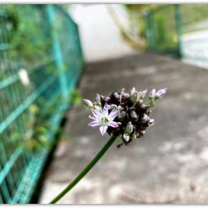 道端の花の正体は…