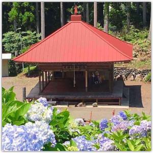 徳島県つるぎ町久藪に紫陽花を見に行く