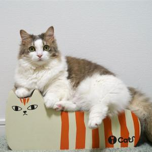 ダンボール爪とぎ『しまネコ』の感想。猫がネコで爪とぎ!