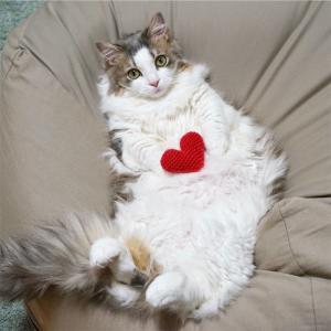 かぎ針編み初心者と猫。「編んだもの」と「猫用品の編みもの本」紹介