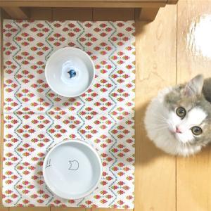 猫の水遊び問題!歴代の水飲み器を紹介