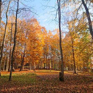 芝生か林間が選べ、施設も充実している無料のキャンプ場!トムテ文化の森 キャンプ場